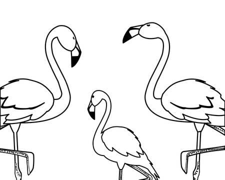 exotic flemish family birds vector illustration design