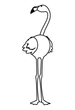 exotic flemish bird with head up vector illustration design Illusztráció