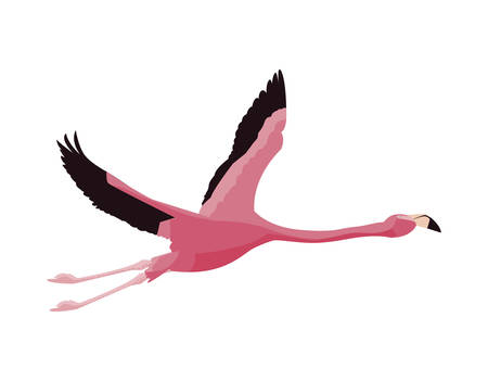 elegant flamingo bird flying vector illustration design