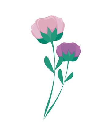 beautiful flowers nature icon vector illustration design