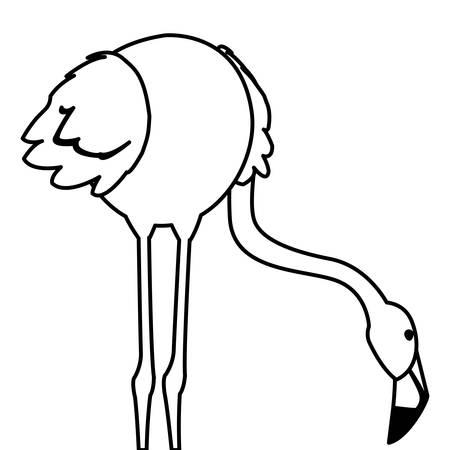 exotic flemish bird with head down vector illustration design Ilustracja