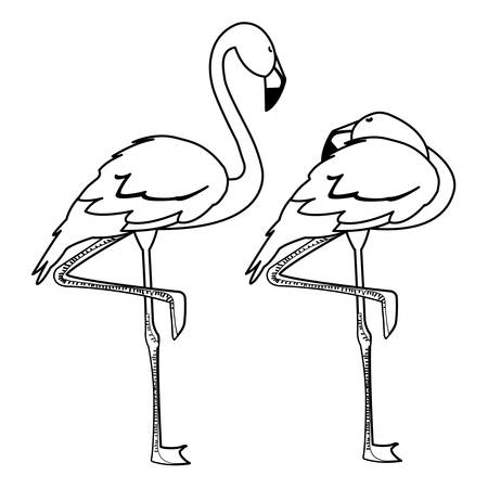 exotic flemish couple birds with different poses vector illustration design