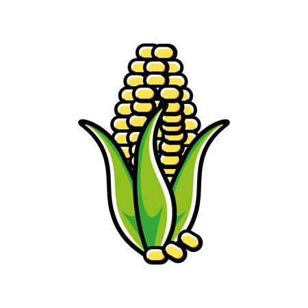 fresh corn vegetable icon vector illustration design