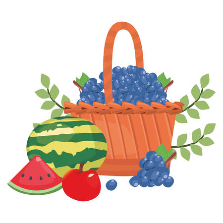 Watermelon apple grapes branches fresh food wicker basket vector illustration