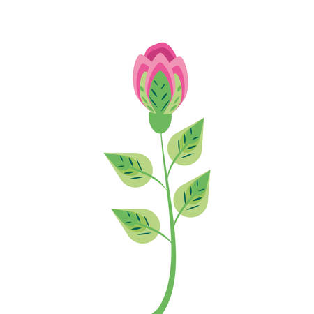 beautiful rose natural in branch and leafs vector illustration design