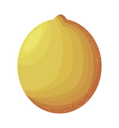 fresh orange fruit isolated icon vector illustration design