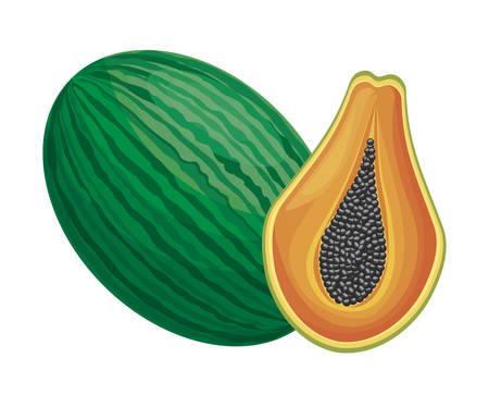 fresh half of papaya and watermelon fruits vector illustration design