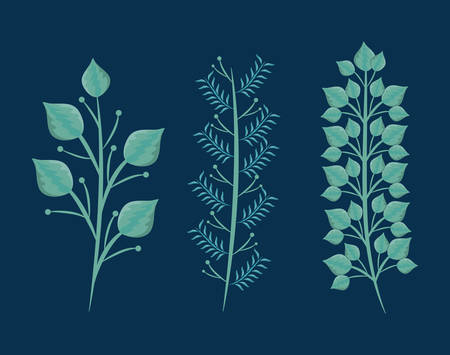 set of branches with leafs natural vector illustration design