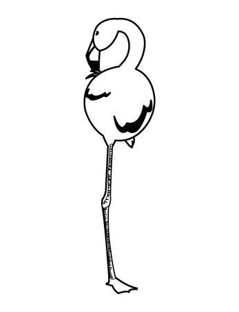 exotic flemish bird with head up vector illustration design Çizim