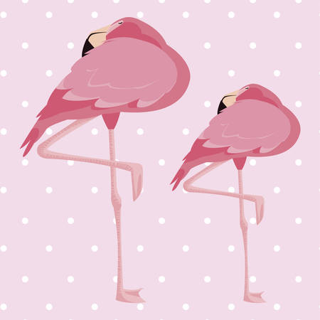 elegant flamingo birds couple dotted background vector illustration design