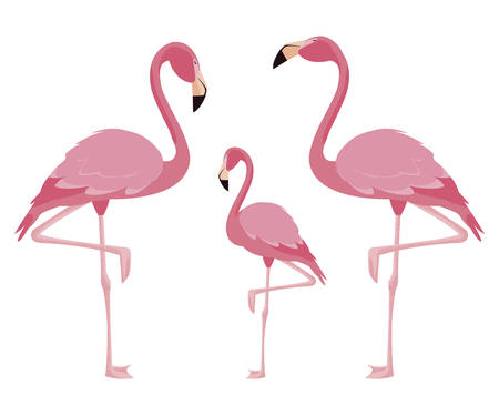 elegant flamingo birds family illustration design Ilustrace