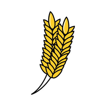 spike rice isolated icon vector illustration design Ilustração