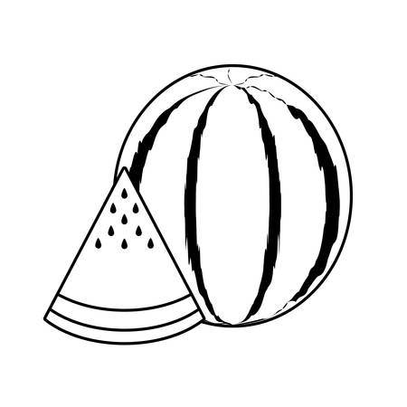 fresh watermelon and slice fruits vector illustration design