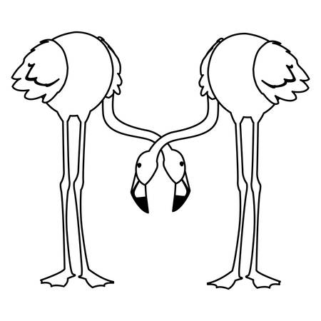 exotic flemish couple birds with heads down vector illustration design Vectores