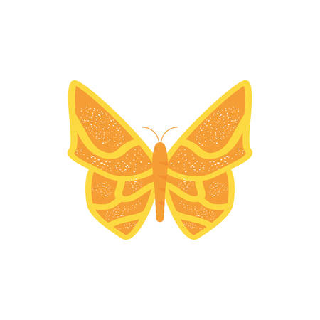 beautiful butterfly isolated icon vector illustration design
