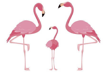 elegant flamingo birds family vector illustration design