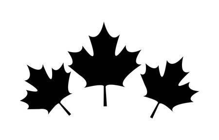set of leafs maple canada vector illustration design