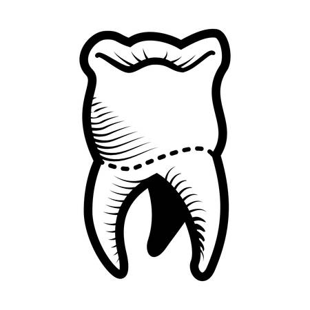 tooth human isolated icon vector illustration design Illusztráció