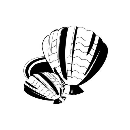 marine shell animal summer icon vector illustration design