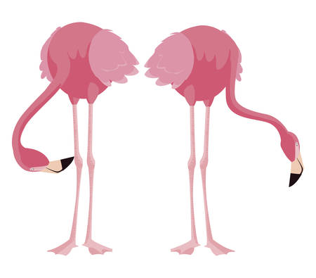 elegant flamingo birds couple vector illustration design Zdjęcie Seryjne - 134741091