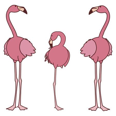 exotic pink flemish family birds vector illustration design Векторная Иллюстрация