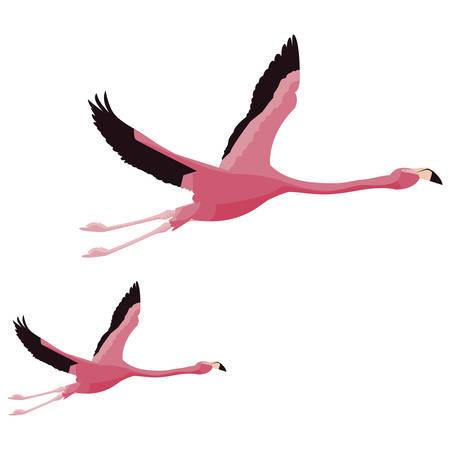 elegant flamingo birds couple flying vector illustration design