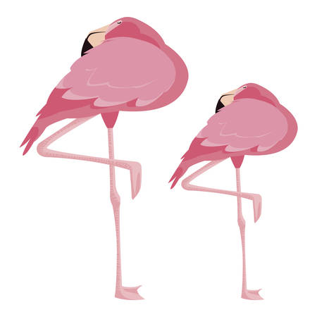 elegant flamingo birds couple vector illustration design