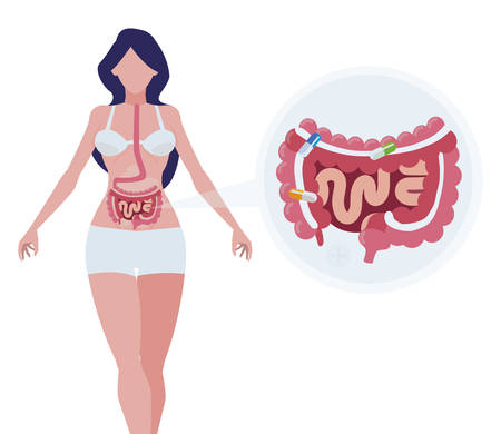 female anatomy with digestive system vector illustration design  イラスト・ベクター素材