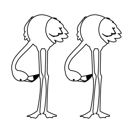 exotic flemish couple birds with heads down vector illustration design