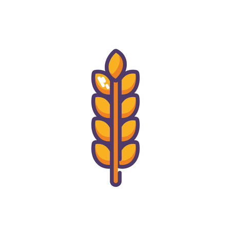 wheat leaves in white background vector illustration design Ilustração