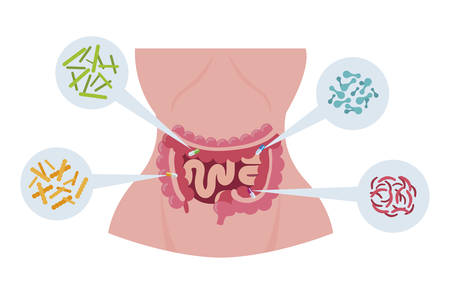 female anatomy with digestive system and bacteria vector illustration design