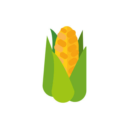 Corn design, Food vegetable agriculture green plant maize cob and organic theme Vector illustration  イラスト・ベクター素材