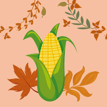 Corn and leaves of thanksgiving day design, Autumn season holiday greeting and traditional theme Vector illustration
