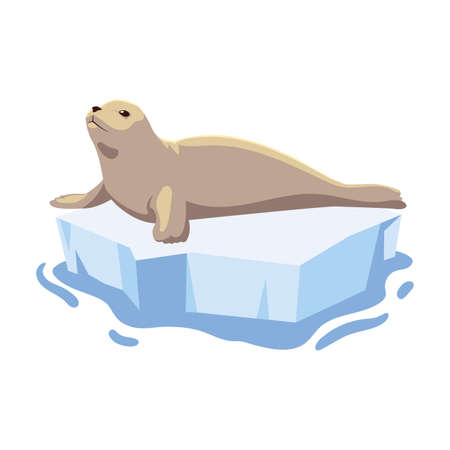 seal on an ice floe drifting illustration design