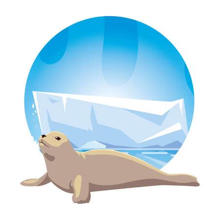 seal at the north pole, arctic landscape vector illustration design