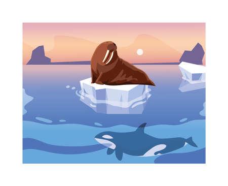 walrus on an ice floe drifting vector illustration design