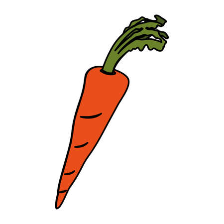 carrot design, Vegetable organic food healthy fresh natural and market theme Vector illustration 向量圖像