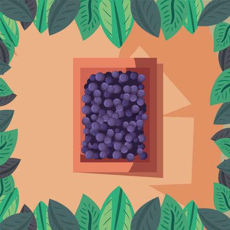 Wine grapes inside box design, Winery alcohol drink beverage restaurant and celebration theme Vector illustration