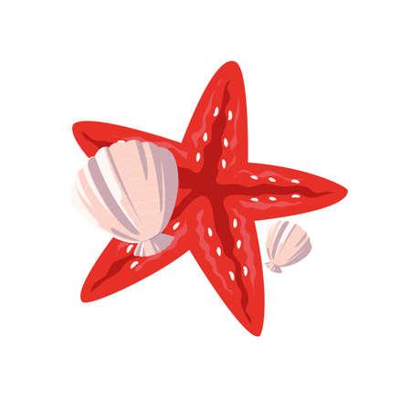 starfish shell animal summer icon vector illustration design