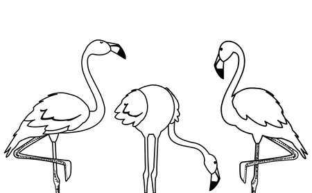 exotic flemish group birds with different poses vector illustration design