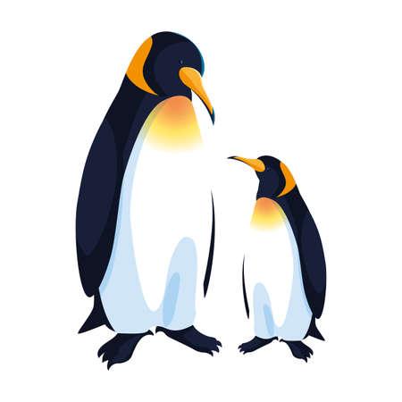 emperor penguins couple on white background vector illustration design