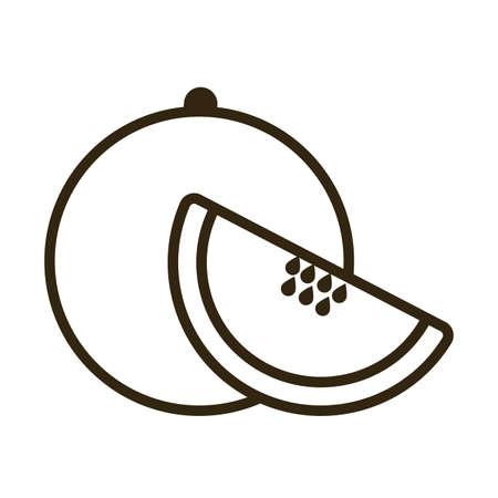 cantaloupe on white background, line style icon vector illustration design