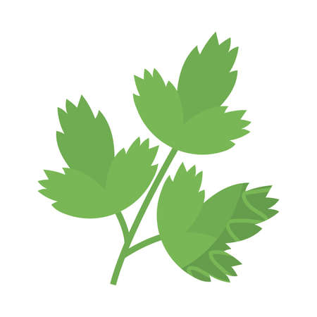 fresh and healthy vegetable, celery leaves on white background vector illustration design
