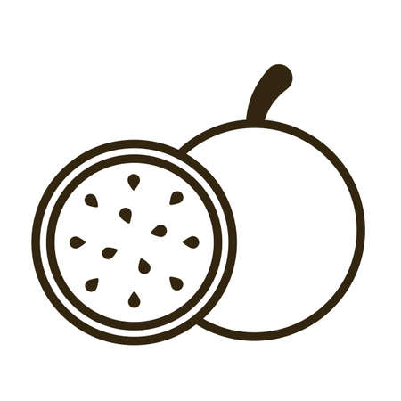 pitahaya on white background, line style icon vector illustration design