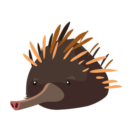 head of echidna on white background vector illustration design