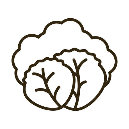 lettuce leaves on white background, line style icon vector illustration design