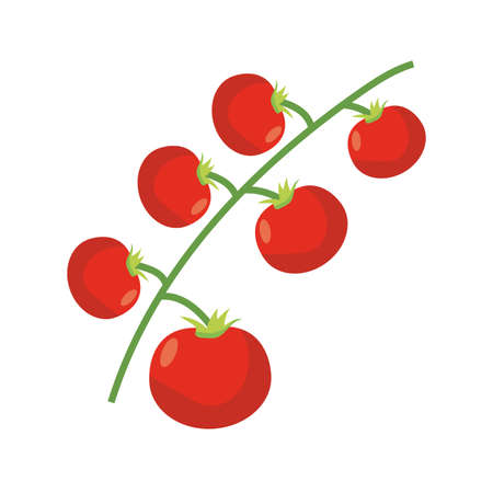 branch with tomatoes icon over white background, flat detail style, vector illustration