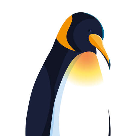 emperor penguin on white background vector illustration design