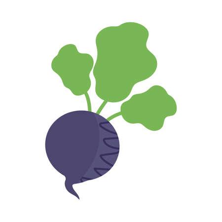 fresh and healthy vegetable, beet on white background vector illustration design 일러스트