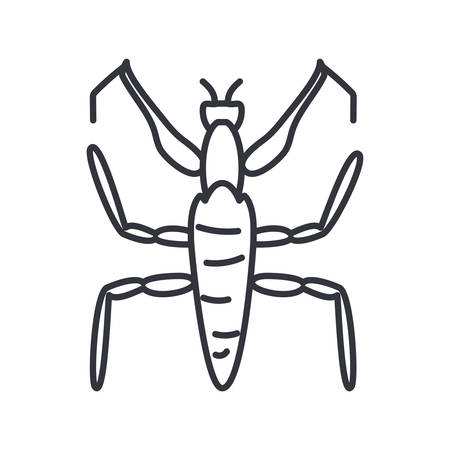 mantis insect over white background, line detail style icon, vector illustration